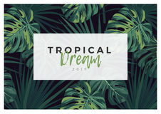 Dark vector tropical typography design with green jungle palm leaves. Stock Photo