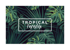 Dark vector tropical typography design with green jungle palm leaves. Stock Image