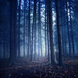 Dark vintage color forest Royalty Free Stock Photography