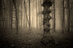 Dark vintage photo of a forest with fog and strange tree Royalty Free Stock Photo