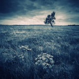 Dark vintage valley. With a lonely tree on a skyline in a stormy weather royalty free stock photos