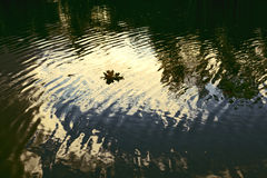 Dark Water. Autumn leaves floating on dark water with reflection Stock Photography