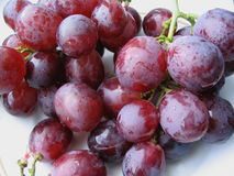 Dark wet grapes Stock Photography