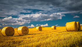 Dark wheat field in Nyon Switzerland. Bales of hay drying on the sunny field Stock Photos
