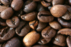 Dark whole coffee beans background. Macro view Stock Images