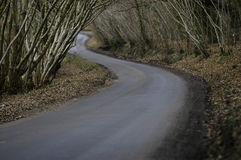 Dark winding road. A country lane winds through stark woods Royalty Free Stock Photography