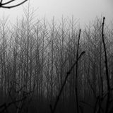 Dark winter foggy landscape with trees Stock Image