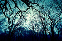 Dark winter forest background. Royalty Free Stock Photos