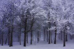 Dark Winter Forest Fog Stock Photo
