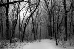 Dark Winter Forest Fog Stock Photos
