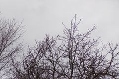 Dark Winter Sky With Black Leafless Trees. It is winter and everything is grey and cold and in hibernation stock images