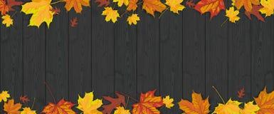 Dark Wood Autumn Foliage Header Stock Images