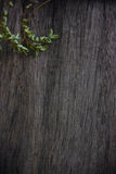 Dark wood background Stock Photography