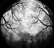 Dark Wood. Fisheye interpretation of Autumn Forest and Royalty Free Stock Photography