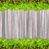 Dark wood texture background plank panel timber and green plant Stock Photos