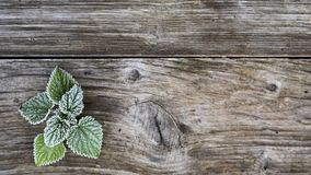 Grunge wooden surface with frost greenery, flat lay, background for text royalty free stock photos