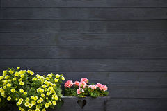 Dark Wooden Wall with Flowers Royalty Free Stock Photos