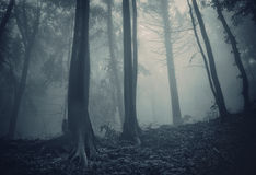 Dark woods with blue fog Stock Images