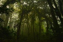 The dark woods. Rainforest, santa elena, costa rica stock image