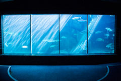 Darkest room with a fish tank. At the aquarium Royalty Free Stock Image
