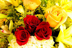 Darkly red three roses. In the centre of a bouquet consisting of yellow colours Royalty Free Stock Photos