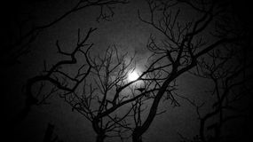 When the darkness creeps you, let me be the light. Taken in high contrast B/W with the moon in the background with the tree silhouetted against it in the Stock Photos