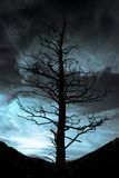 Darkness Falls. Dead Spooky Tree with Dark Blue Sky in Rocky Mountain National Park Stock Photos