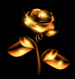 Darkness and golden fairy flower Royalty Free Stock Photos