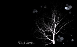 Darkness tree background Stock Photo
