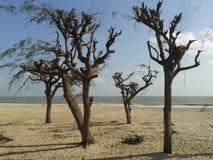 Darktree Immagini Stock