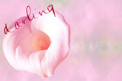 Darling background Royalty Free Stock Photo