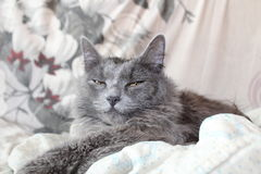 Darling girl kitty stock photos