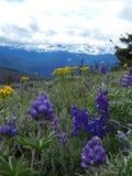 Darling Mountain View de las rocas de la cabra Fotos de archivo libres de regalías