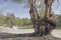 The Darling river in the far west of New South Wales stock images