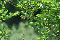 Darmozjad na liściach obrazy stock