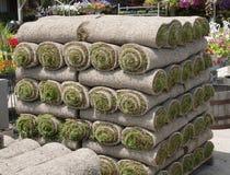 Darniuje murawy trawy Zdjęcia Royalty Free