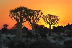 Darrningtrees Royaltyfri Fotografi