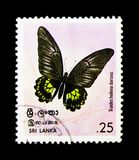 Darsius Sri Lankan Birdwing Troides helena, serie бабочек, около 1978 Стоковые Изображения RF