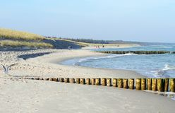 Darss Fischland peninsula at Baltic sea Germany. beach landscape with dunes reed and waves.  royalty free stock image