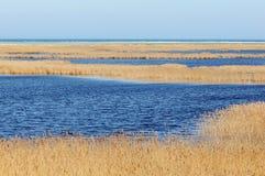 Darsser Ort bij Oostzeestrand op Darss-schiereiland Royalty-vrije Stock Fotografie