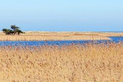 Darsser Ort bij Oostzeestrand op Darss-schiereiland Stock Foto's