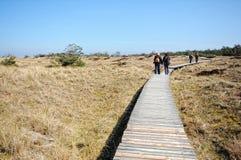 Darsser Ort på stranden för baltiskt hav på den Darss halvön Royaltyfria Bilder