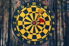 Dart board and darts on tree Stock Photo