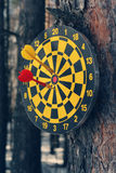 Darts on a tree. Closeup of a dartboard and darts hung on a tree in a forest Royalty Free Stock Photos