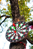 Dartboard hanging on tree Stock Photography