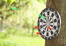 Dartboard in nature Stock Image