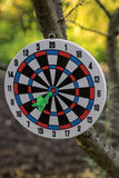 Dartboard on tree. Dart in center of target Stock Images