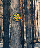 Dartboard on a tree royalty free stock photos