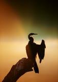 Darter avec le lever de soleil brumeux au-dessus de l'eau Images stock