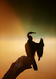 Darter with misty sunrise over water Stock Images